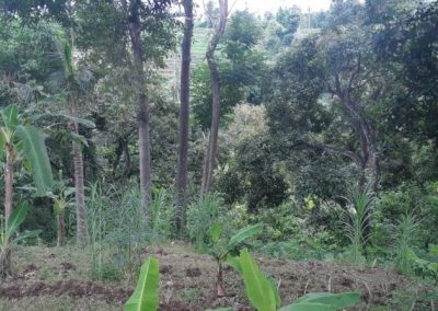 Land for sale with valley view 96.874. – Euro (Listing ID: 225549)