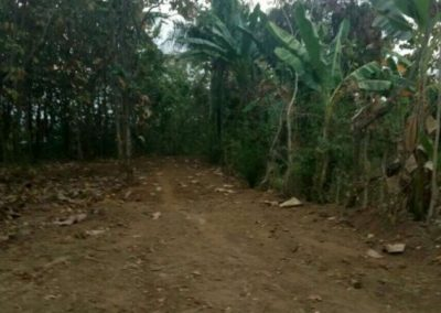 land for sale quickly central lovina 40.624. – Euro (Listing ID: 225010)