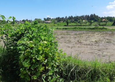 Land for sale in central Lovina 218.747. – Euro (Listing ID: 225699)