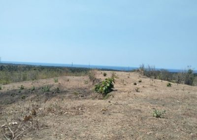 22050 M2 Of The Land With Ocean View IDR 30.000.000 per are (Listing ID: 209967)