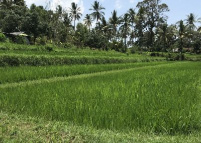 A peacefull surrounding plot of land for sale Rp. 16,000,000 / 100 M2 (Listing ID: 217869)