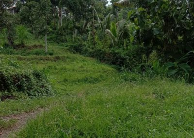 LAND FOR SALE IN LOVINA 50,026 , – Euro (Listing ID: 228676)