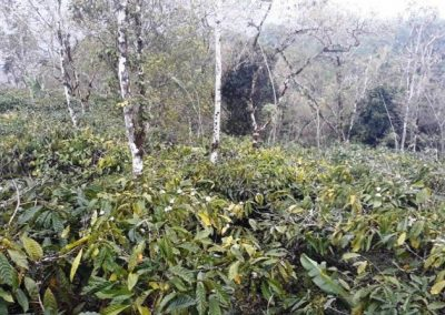 Coffee Plantation Land For Sale 232,224 , – Euro (Listing ID: 229186)