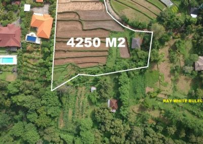 Land for Sale in Lovina 645,642 , – Euro (Listing ID: 224290)