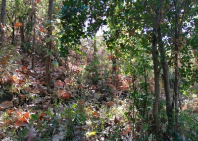 245369-land-for-sale-with-low-price-in-lovina-1-794