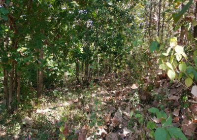 245369-land-for-sale-with-low-price-in-lovina-2-794