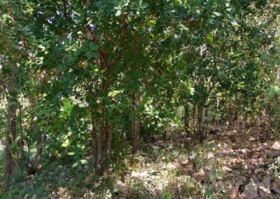 245369-land-for-sale-with-low-price-in-lovina-3-794