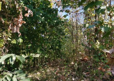245369-land-for-sale-with-low-price-in-lovina-5-794
