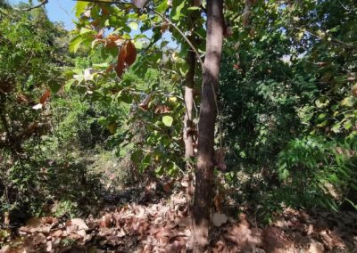 245369-land-for-sale-with-low-price-in-lovina-6-794