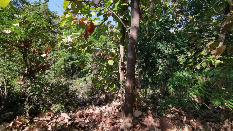 LAND FOR SALE WITH LOW PRICE IN LOVINA – 12,830 € (ID: 245369)