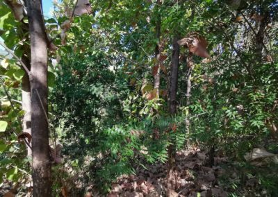 245369-land-for-sale-with-low-price-in-lovina-7-794