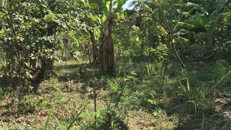 Land for Sale – 22,442 € (ID: 245456)