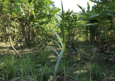 245456-land-for-sale-3-794 (1)