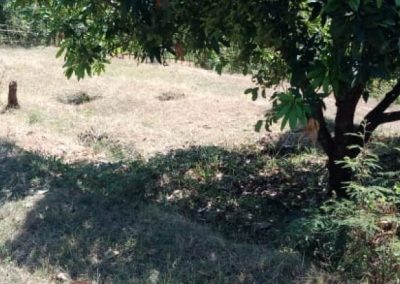 246892-land-for-sale-in-lovina-with-nice-view-7-794
