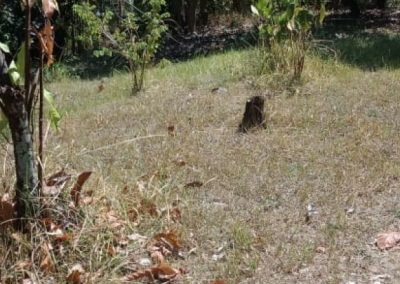246895-land-for-sale-in-lovina-with-nice-view-1-794