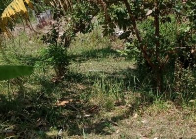 247270-land-for-sale-in-central-lovina-1-794