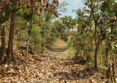 249459-land-with-sea-view-in-lovina-for-sale-4-794