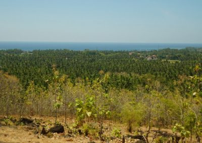 249459-land-with-sea-view-in-lovina-for-sale-8-794