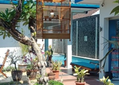 HOMESTAY FOR SALE IN CENTRAL LOVINA – 255,991 € (ID: 250066)