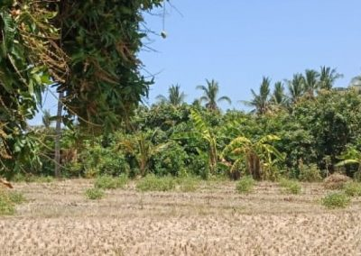250264-land-for-sale-with-low-price-in-lovina-7-794