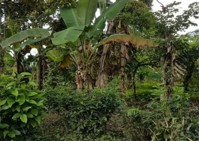 252287-land-for-sale-in-north-bali-2-794