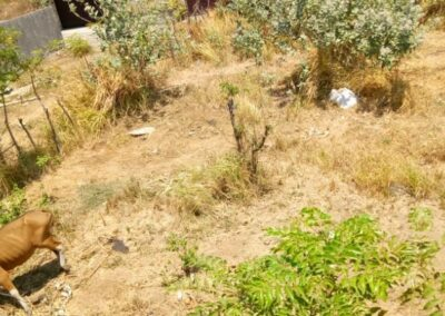 213301-small-plot-of-land-for-sale-in-singaraja-4-794