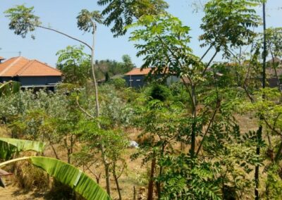 213301-small-plot-of-land-for-sale-in-singaraja-6-794