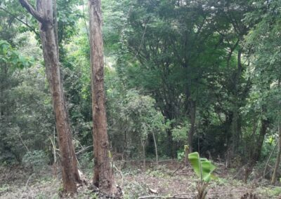 225530-land-for-sale-2-794