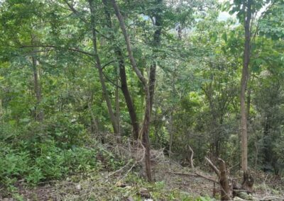 225530-land-for-sale-3-794