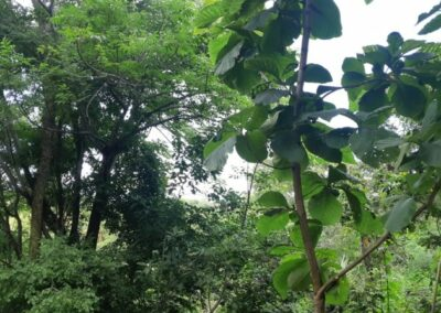 225530-land-for-sale-4-794