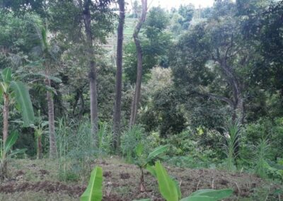 225549-land-for-sale-with-valley-view-2-794