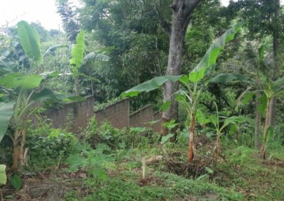 225549-land-for-sale-with-valley-view-3-794