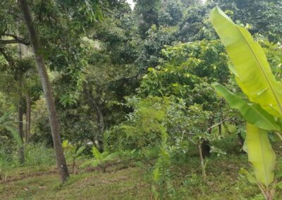 225549-land-for-sale-with-valley-view-4-794