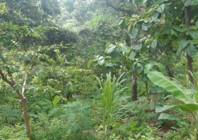 225549-land-for-sale-with-valley-view-5-794