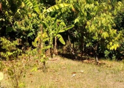 246892-land-for-sale-in-lovina-with-nice-view-1-794
