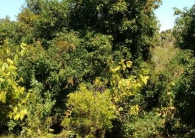246892-land-for-sale-in-lovina-with-nice-view-2-794
