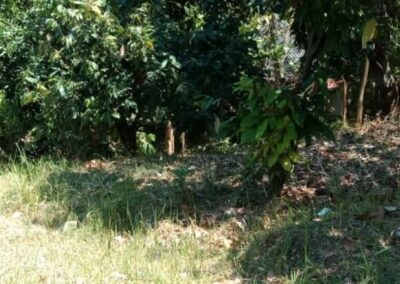 246892-land-for-sale-in-lovina-with-nice-view-4-794
