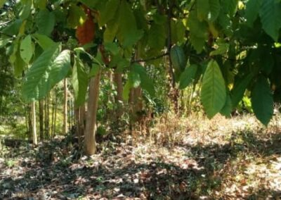 246895-land-for-sale-in-lovina-with-nice-view-4-794