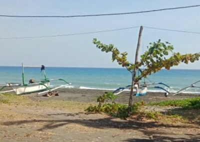 249254-beachland-for-sale-in-the-north-of-bali-1-794