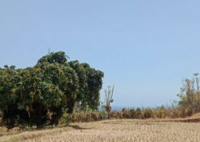 250264-land-for-sale-with-low-price-in-lovina-1-794