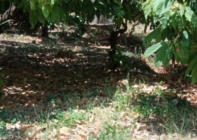 250264-land-for-sale-with-low-price-in-lovina-3-794