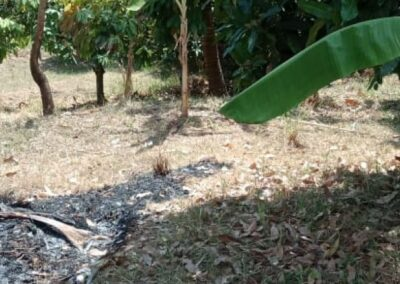 250264-land-for-sale-with-low-price-in-lovina-4-794