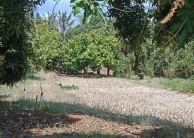 250264-land-for-sale-with-low-price-in-lovina-5-794