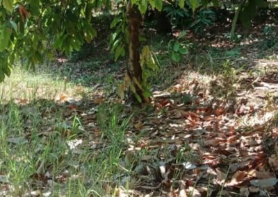 250264-land-for-sale-with-low-price-in-lovina-6-794