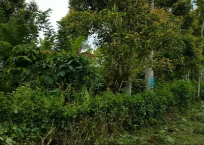 252287-land-for-sale-in-north-bali-1-794