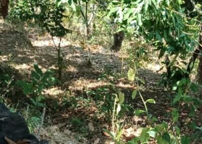 254313-sea-view-land-for-sale-in-lovina-10-794