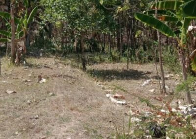 254657-very-cheap-land-for-sale-idr-30000000-100m2-1-794