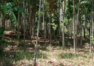 254657-very-cheap-land-for-sale-idr-30000000-100m2-2-794