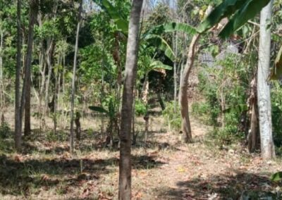 254657-very-cheap-land-for-sale-idr-30000000-100m2-5-794