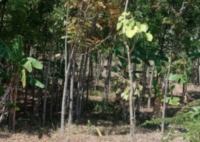 254657-very-cheap-land-for-sale-idr-30000000-100m2-7-794